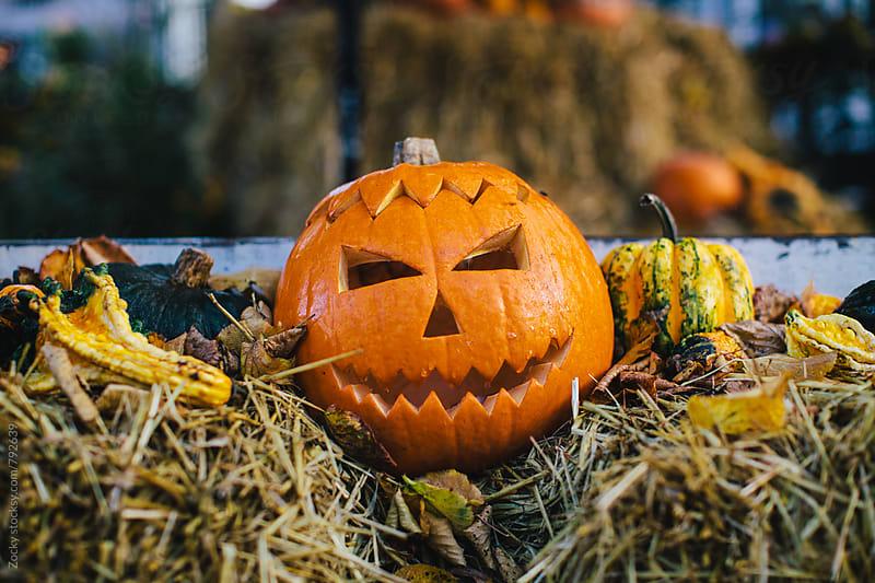 Carved pumpkin. by Zocky for Stocksy United