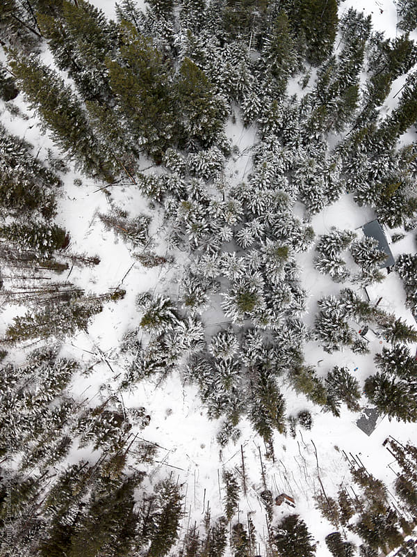 Winter Forest From Above by Ronnie Comeau for Stocksy United