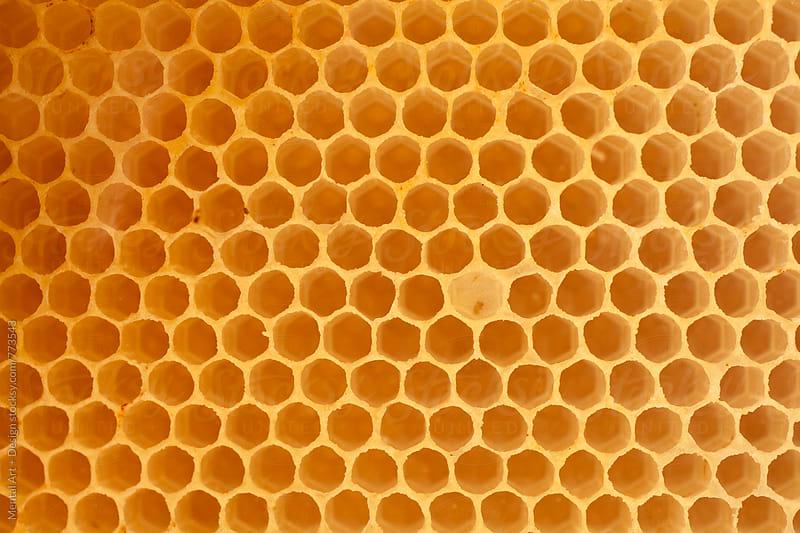 Honeycomb by Mental Art + Design for Stocksy United