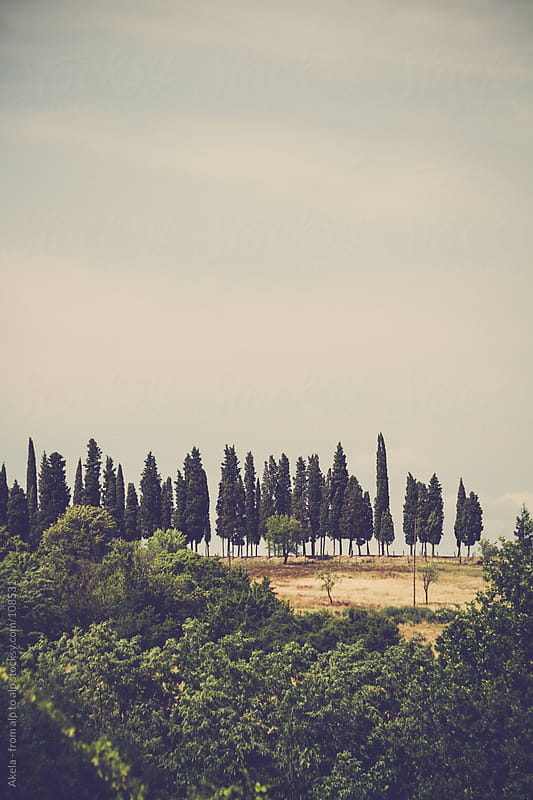 cypresses in the tuscany by Leander Nardin for Stocksy United