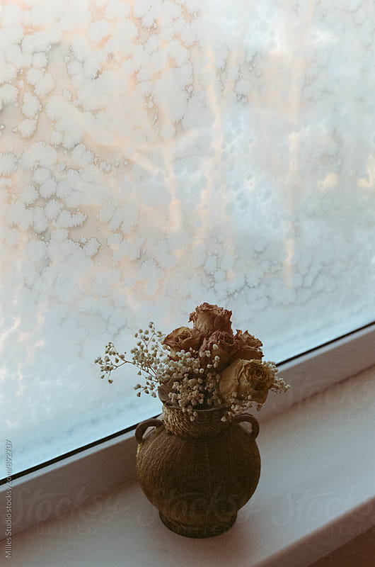 Dry flowers by Milles Studio for Stocksy United