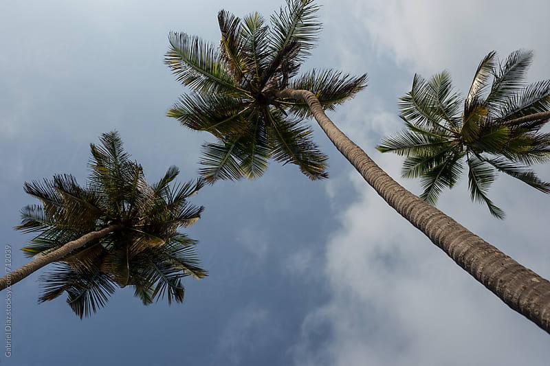 palm and beach by Gabriel Diaz for Stocksy United