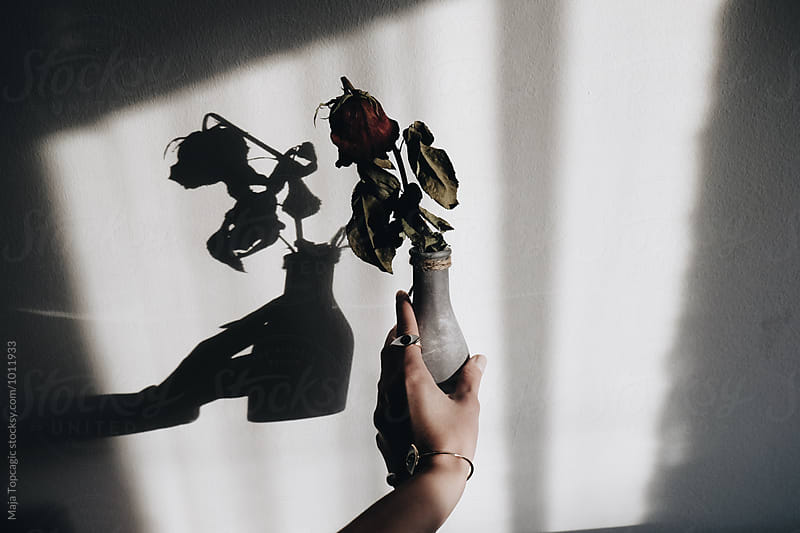 Woman holding a vase with a rose by Maja Topcagic for Stocksy United
