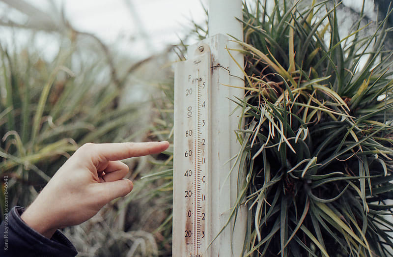 Greenhouse temperatures by Kara Riley for Stocksy United