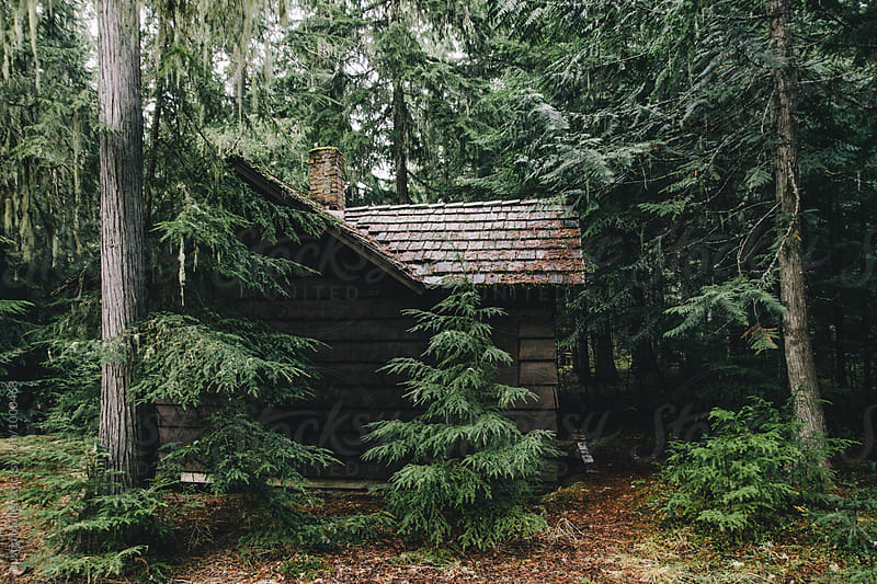 Abandoned Cabin in Forest by Justin Mullet for Stocksy United