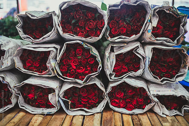 Red Roses by Lumina for Stocksy United