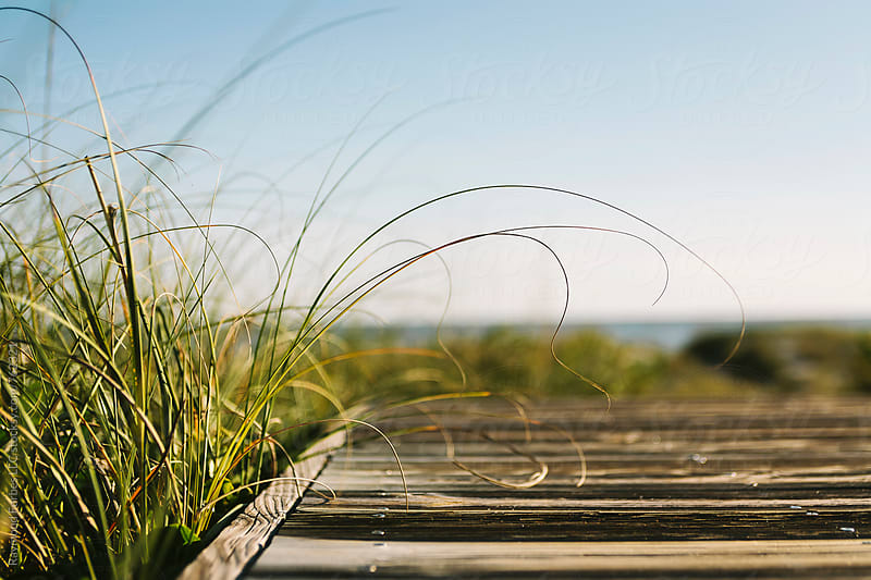 Boardwalk to Beach on Fall Afternoon by Raymond Forbes LLC for Stocksy United