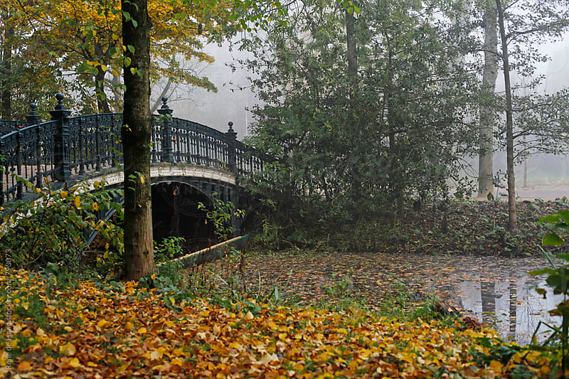 Vondelpark, Amsterdam in the mist in autumn by Rene de Haan for Stocksy United