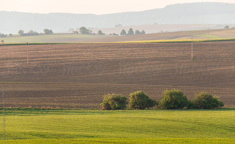 Farmland in Southern Moravia by Marilar Irastorza for Stocksy United