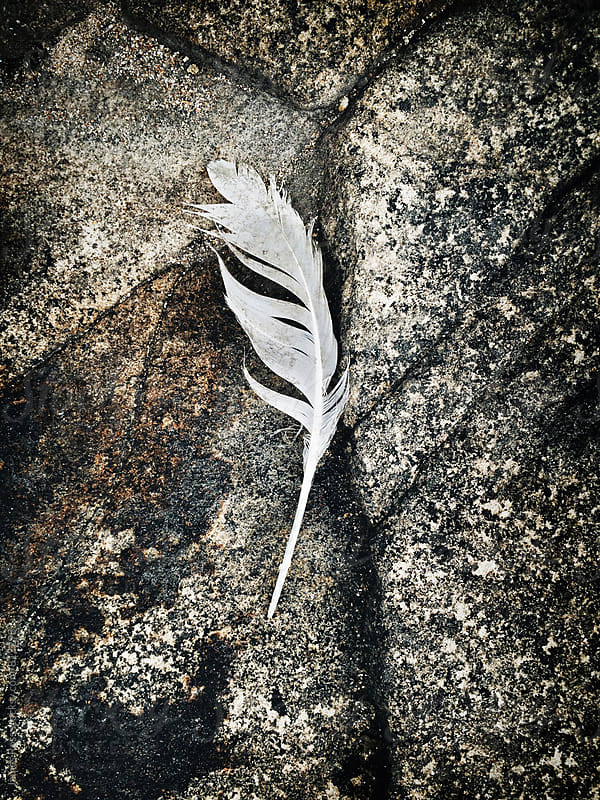 A white feather on a rock by James Ross for Stocksy United