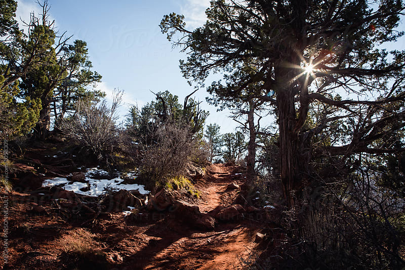 Sun Peeks through Trees on Red Stone Hiking Trail  by MEGHAN PINSONNEAULT for Stocksy United