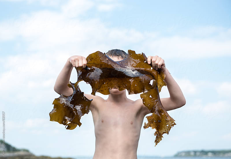 Boy on a beach holds a large piece of kelp up in front of his face by Cara Dolan for Stocksy United