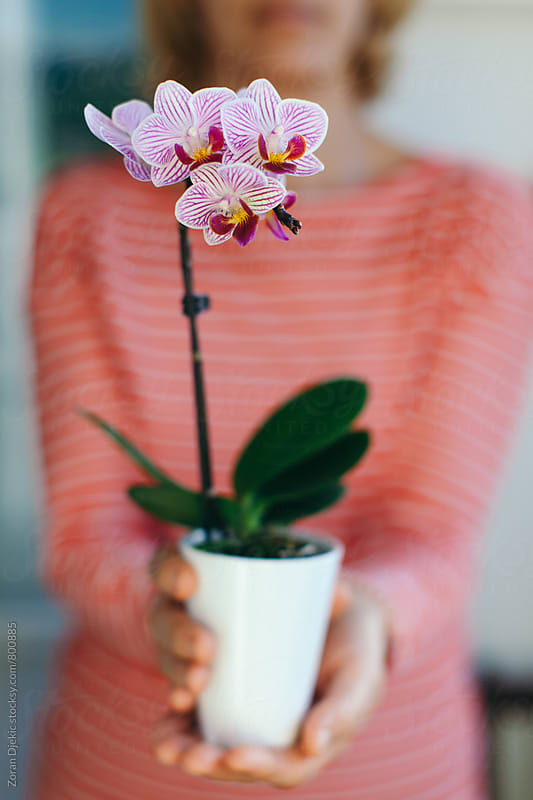 Young woman holding an orchid by Zocky for Stocksy United