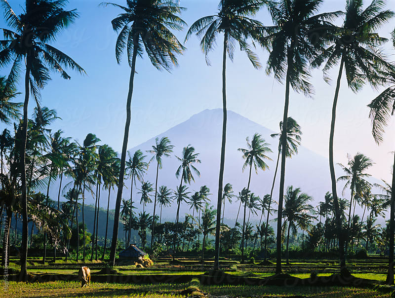 Typical landscape of Bali. Indonesia by Hugh Sitton for Stocksy United