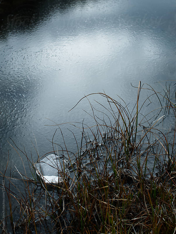 Little piece of ice on a frozen water lagoon with plants by Miquel Llonch for Stocksy United