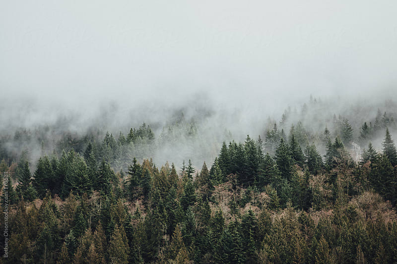 Northwest Fog by Bethany Olson for Stocksy United