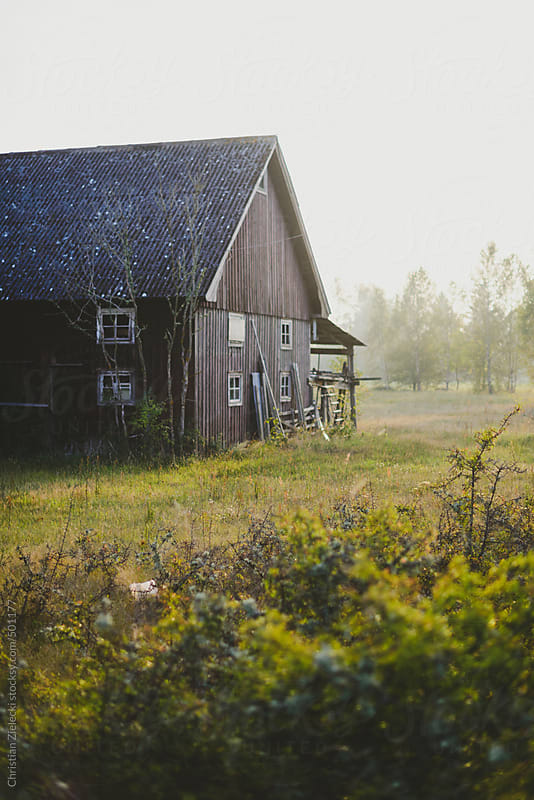 a black barn on a meadow in sunset light by Chris Zielecki for Stocksy United