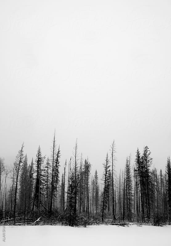 treescape by ALAN SHAPIRO for Stocksy United
