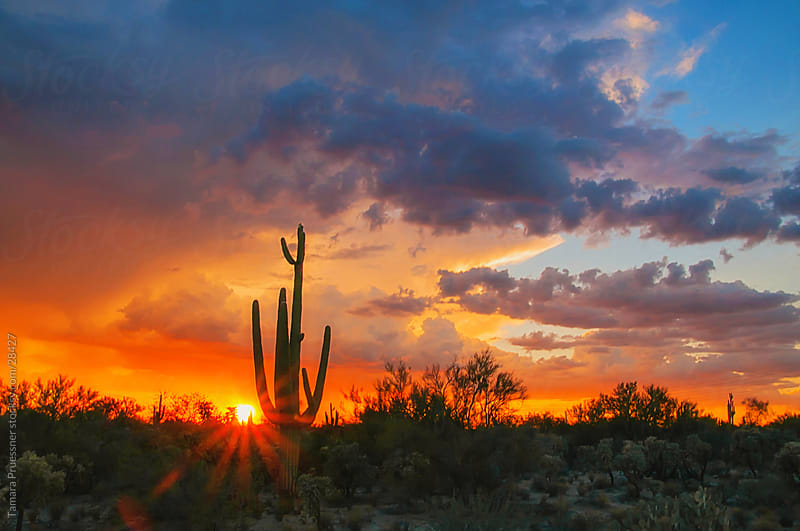 Desert Sunset With Storm Clouds And Cactus by Tamara Pruessner for Stocksy United