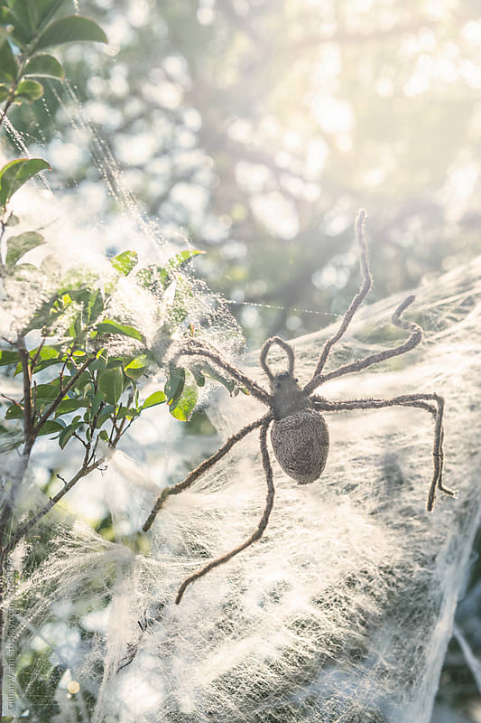 halloween decorating ideas for the garden, giant spider and web, preferably fake by Gillian Vann for Stocksy United