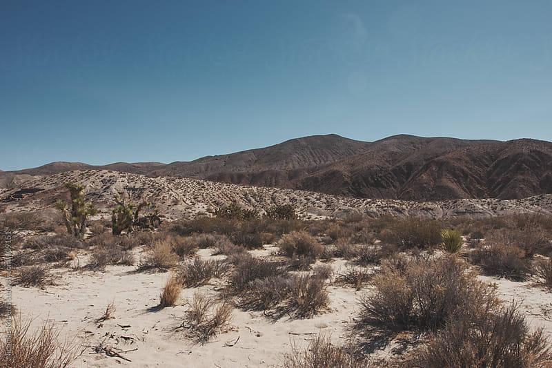 Desert by Nicholas Roberts for Stocksy United
