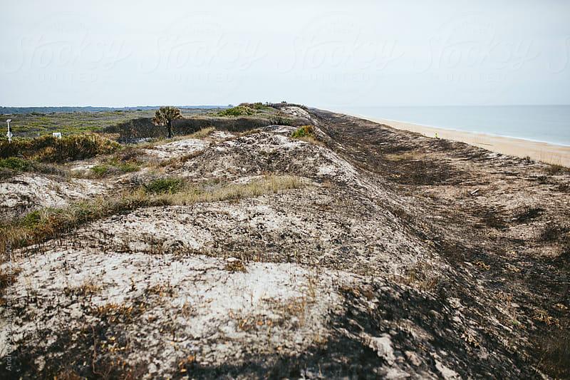 Florida Beaches by Andrew Cebulka for Stocksy United