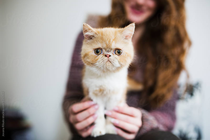 Adorable little kitten looking at camera by Jovana Rikalo for Stocksy United