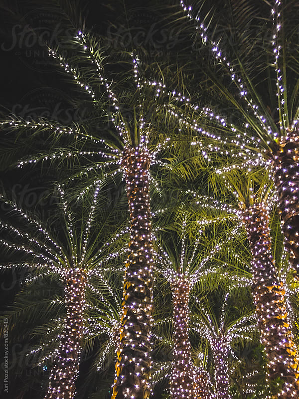 Christmas palm trees by Juri Pozzi for Stocksy United