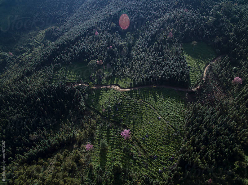aerial view of forest in Yun nan China by Bo Bo for Stocksy United