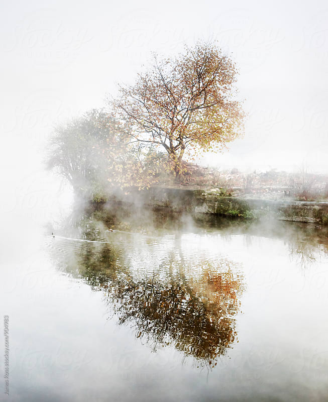 Trees by a river in the fog by James Ross for Stocksy United