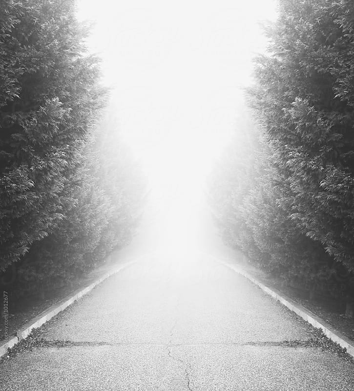 Foggy Road by Paperclip Images for Stocksy United