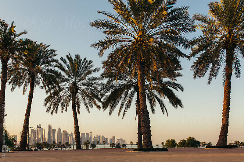 Doha skyline between palm trees by Maja Topcagic for Stocksy United