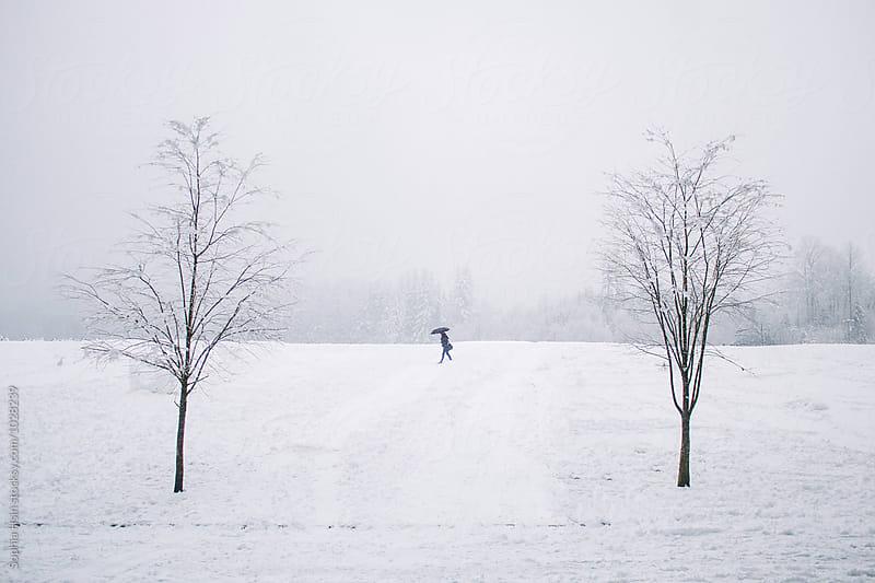 Walk in winter by Sophia Hsin for Stocksy United