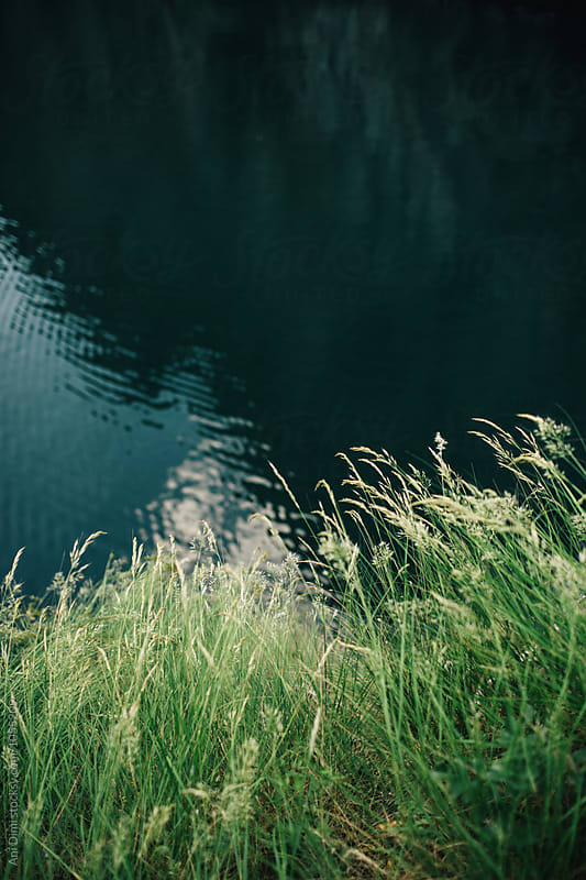 Close-up view of grass along the water's edge by Ani Dimi for Stocksy United