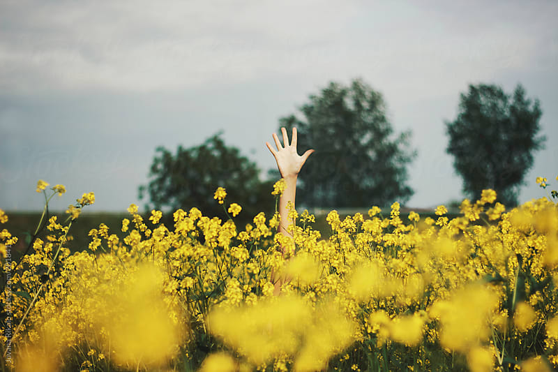 Hand in a yellow flowers by Jovana Rikalo for Stocksy United