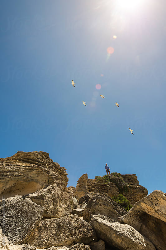 a man stans atop a rocky outcrop, with seagulls flying above him  by Gillian Vann for Stocksy United