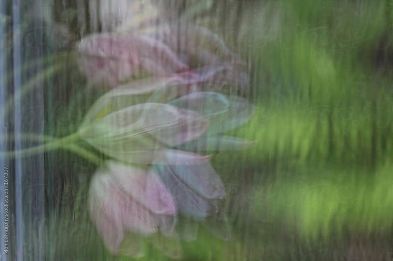 Reflection of tulips in rain splattered window by Monica Murphy for Stocksy United