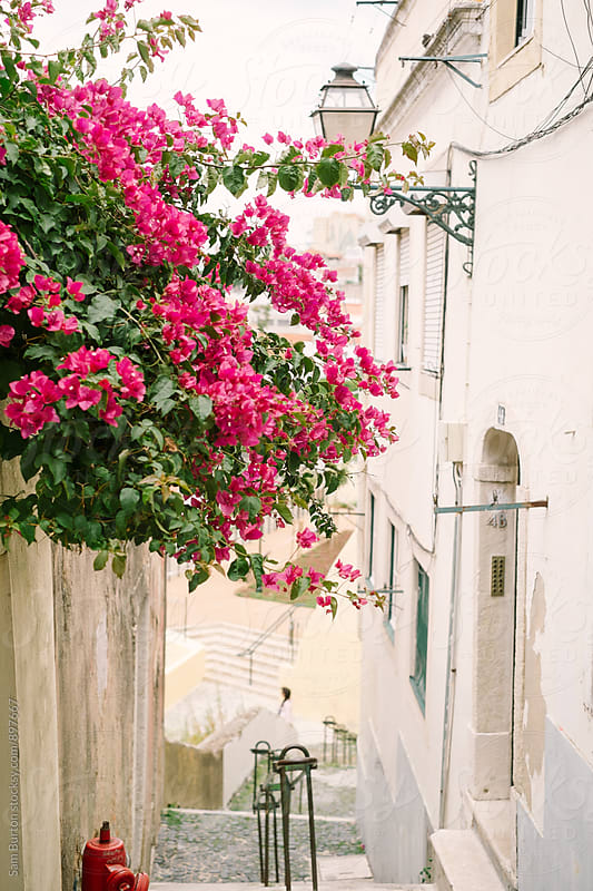 Pink flowers in Lisbon by Sam Burton for Stocksy United