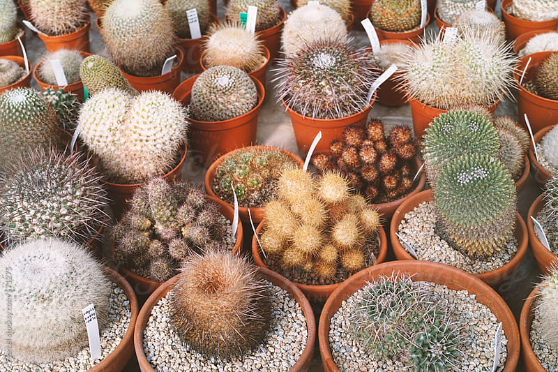 cactus collection by Marcel for Stocksy United