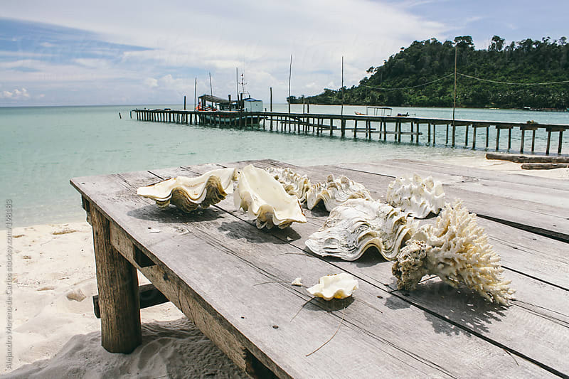 Shells and coral on a wood table on exotic tropical beach by Alejandro Moreno de Carlos for Stocksy United