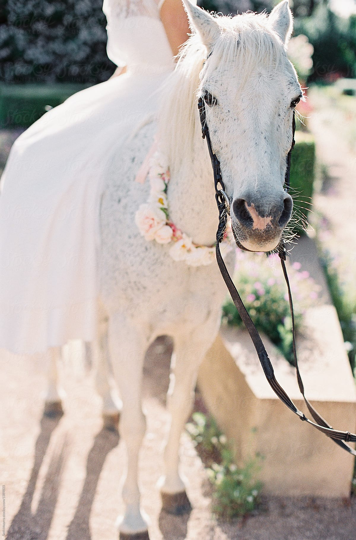 Bride On A White Horse By Seth Mourra Horse Wedding Stocksy United
