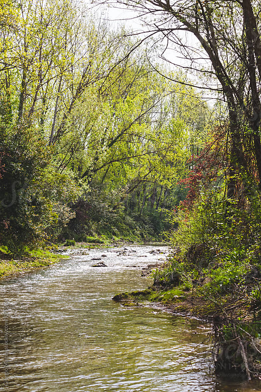 Small River in a Forest of Tuscany, Italy by Giorgio Magini for Stocksy United