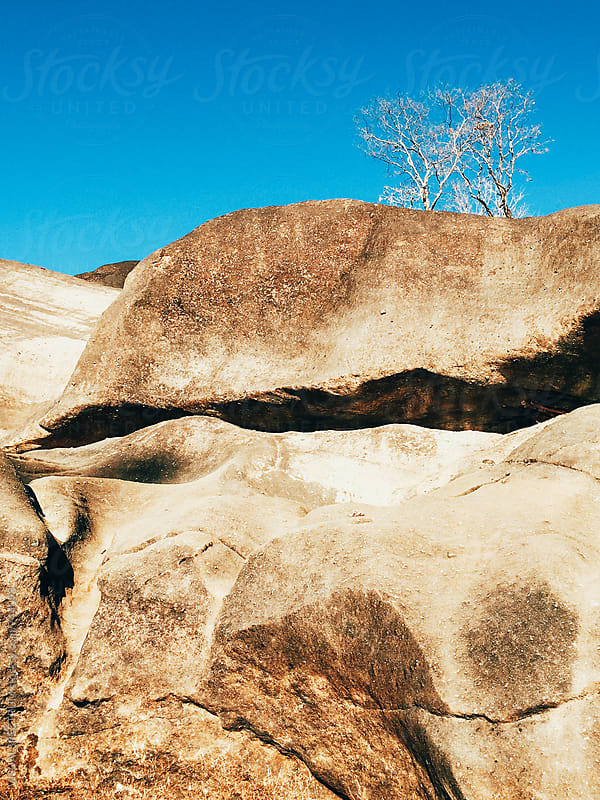 Lonely Tree Growing on Large Rock Formation by Julien L. Balmer for Stocksy United