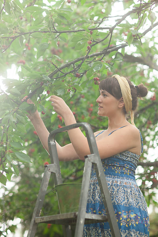 Woman harvesting sweet cherries in a garden. by Mosuno for Stocksy United