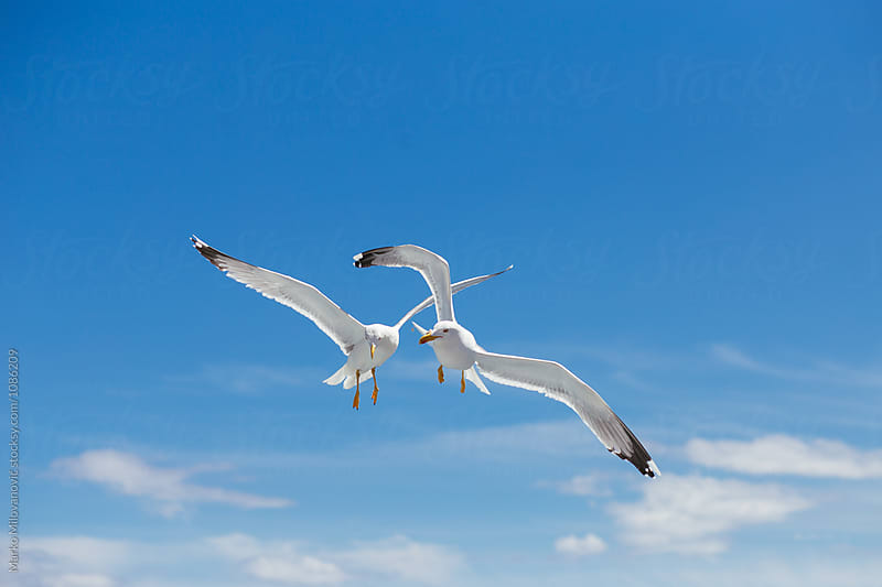 Seagulls flying near ferry boat by Marko Milovanović for Stocksy United