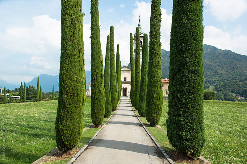 Cupressus alley at Sant'Abbondio Church in Montagnola by Peter Wey for Stocksy United