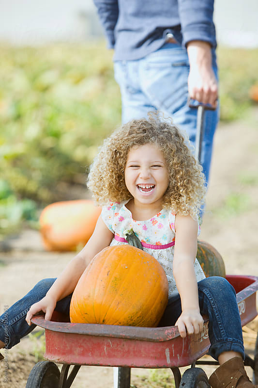 Pumpkins: Girl With Pumpkins Laughing by Sean Locke for Stocksy United