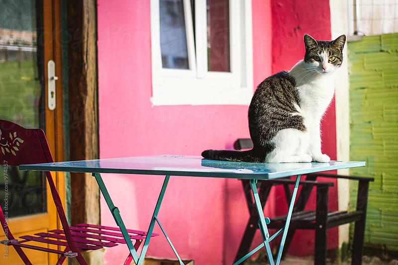 cat on a table by Thais Ramos Varela for Stocksy United