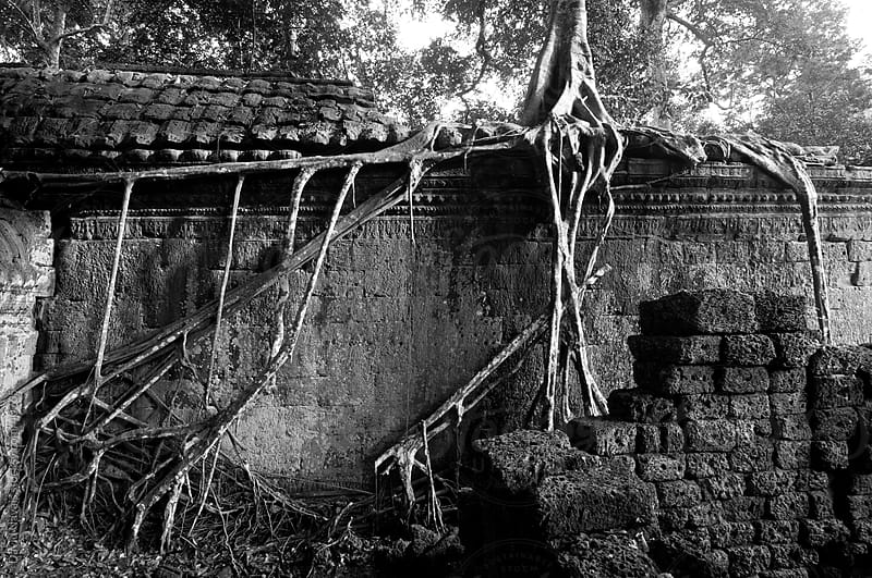Roots of Ta Prohm by David Navais for Stocksy United