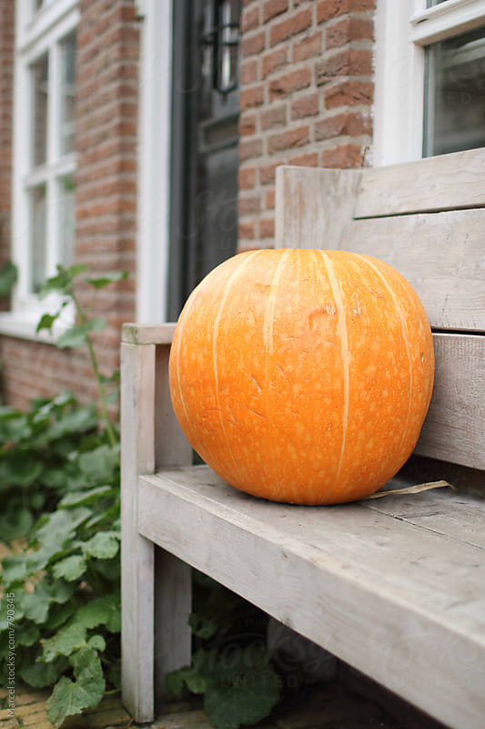 Giant pumpkin on bench in front garden by Marcel for Stocksy United
